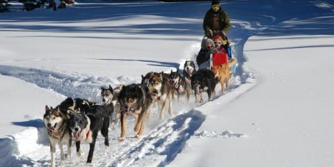 hundeslædekørsel i grønland