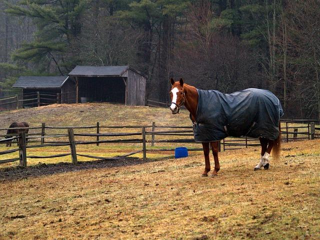 dækken til hest
