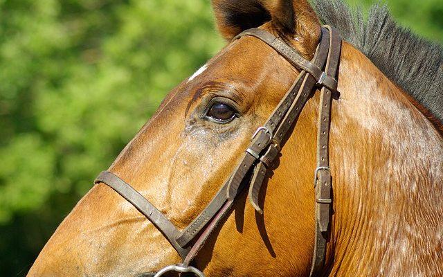 trenser til hest